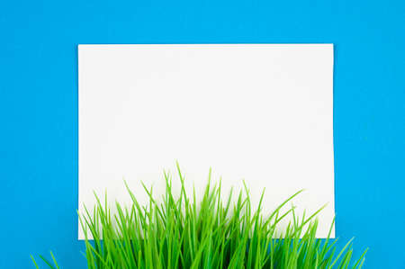 flat lay white leaf on blue background with green grass Reklamní fotografie - 153076357