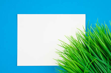 flat lay white leaf on blue background with green grass Reklamní fotografie