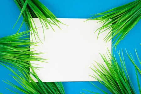 flat lay white leaf on blue background with green grass Reklamní fotografie - 153076374