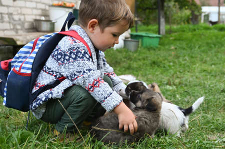 the child plays with the puppies in the yard. High quality photo Reklamní fotografie