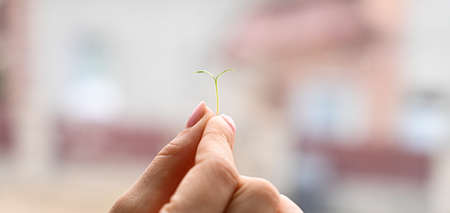 Small green sprout in hand, on a blurred background. High quality photo