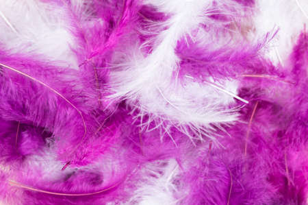 White and purple feathers. Close-up.