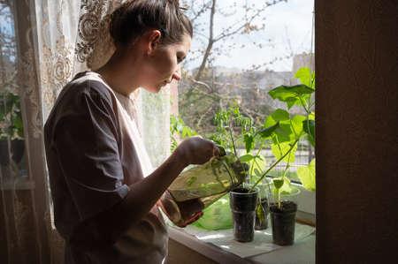 Girl watering seedlings on the windowsill. 版權商用圖片
