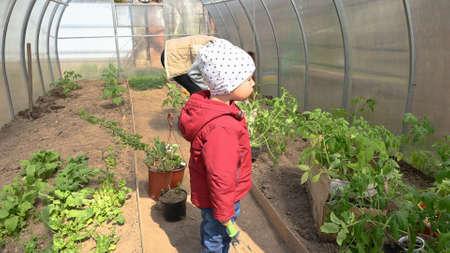 Child in a greenhouse with plants. Reklamní fotografie