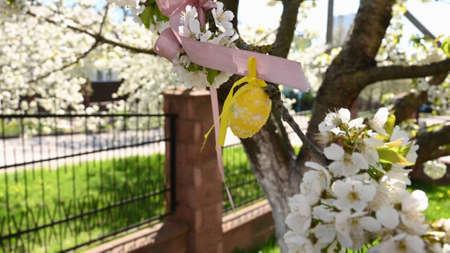 Easter eggs hang on a flowering tree. Reklamní fotografie