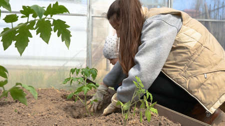 Close-up, a girl plants seedlings in a greenhouse.