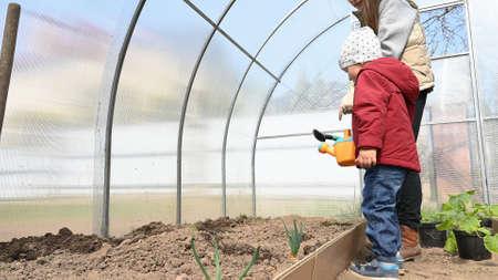 Mother grows eco vegetables in her greenhouse. Reklamní fotografie