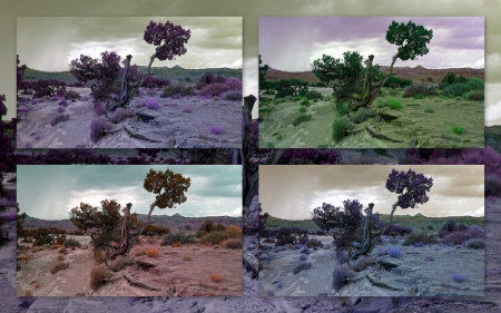 Lonely tree collage, picture taken in Utah Stock Photo - 13970228