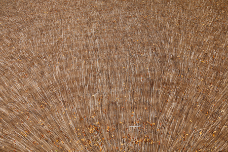 thatched: thatched roof  background natural old Stock Photo