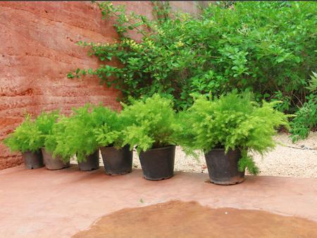 graden: pine trees green nature graden wall Stock Photo