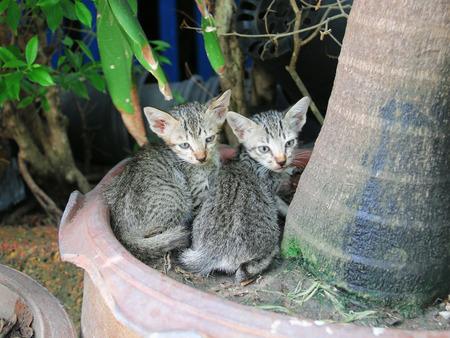 cute kittens: cat. Two kittens. cat two.kittens. Cute Kittens. the Cute Kittens. cute cat.Two cute kittens