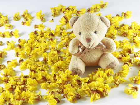 cassia: Cassia Flower in summer Cassia flower bear Stock Photo