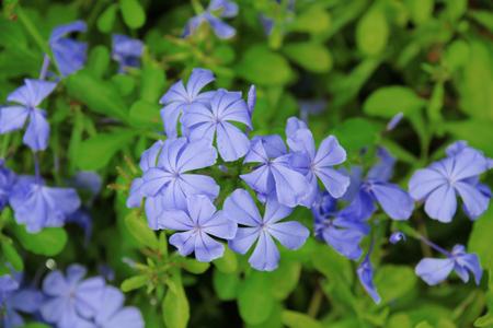 small purple flower: small purple flower selective focus