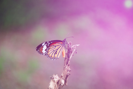 butterfly in the garden: Butterfly garden in the morning Stock Photo