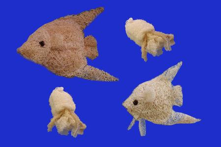 luffa: fish luffa isolated on blue background. Stock Photo