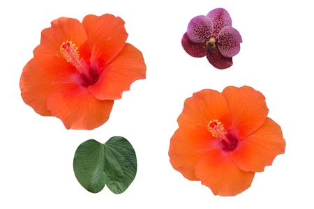 Orange Flower isolated on white background Stock Photo