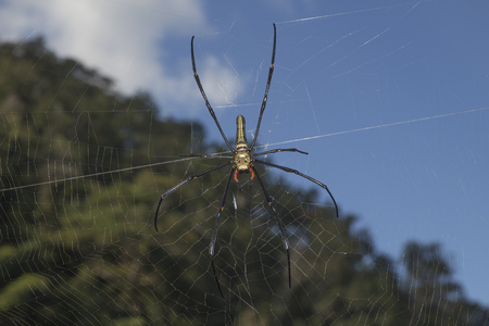 spider in the blurry natural sky background Stock Photo
