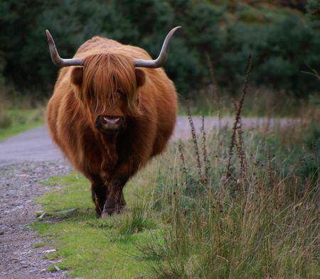 highlander: Highlander escoc�s en el suelto