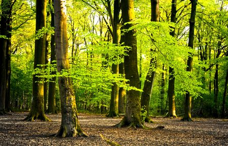 bright summer forest with sunlight between the leaves Stock Photo - 3228954