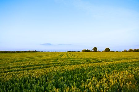 summer farmlandscape with blue sky Stock Photo