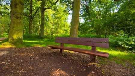 bench in th eforest Stock Photo - 3389465