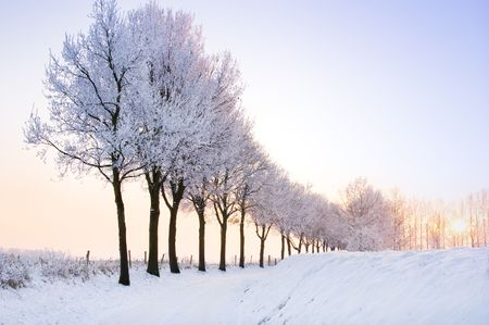 lovely scenic winter landscape with a row of trees at sunset