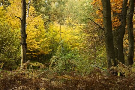 nice multi color autumn forest with yellow green and brown color leaf Stock Photo
