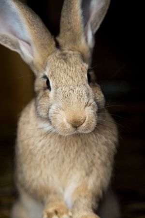 potrait of an young curious bunny looking ar you Stock Photo