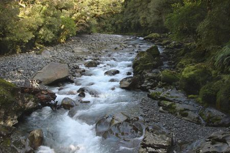 rushing water: Rushing water flows through creek bed in forest