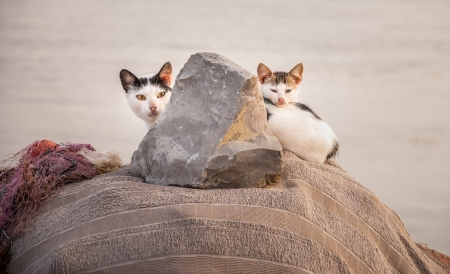 cat family resting behind the rock photo