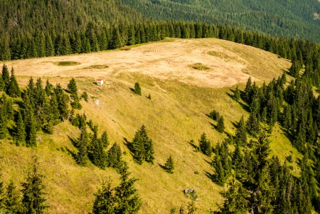 liptov: peak of the hill without trees