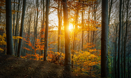 The Sun is Shining through an Autumn Forest  photo