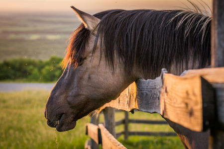 Grazing Horse behind the Fence at Sunset photo