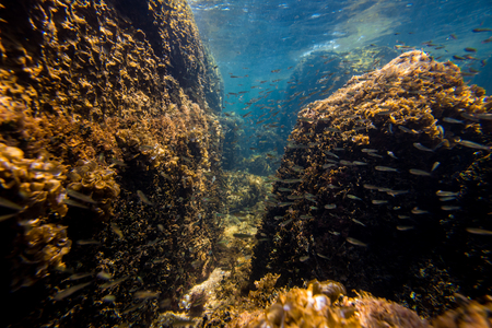 ocean and sea: Underwater Scene with Overgrown Rocks and Little Fish