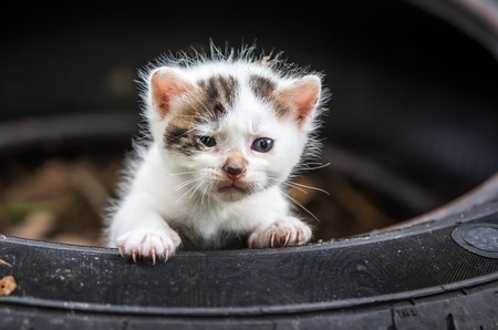 Newly Born Cute Little White Baby Cat