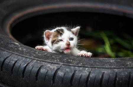 Newly Born Cute Little White Baby Cat With Open Mouth Without Teeths Stock Photo
