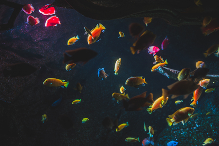 Many Different Colorful Fish Illuminated on Dark Background