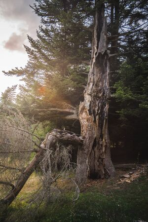 Atmospheric Scenery with Old Tree in Beautifful Golden Light