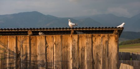 Pigeons Sitting on Dovecote with Beautiful Country in Background