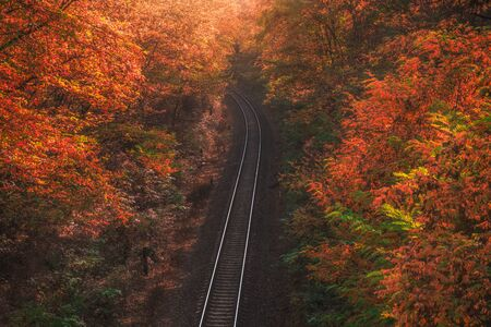 High Angle View of Empty Railway in Autumn Forest with Colorful Trees Stockfoto