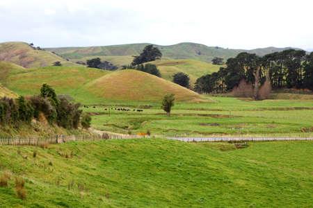 australasia: Rural farming scene, Wairarapa, New Zealand, Australasia