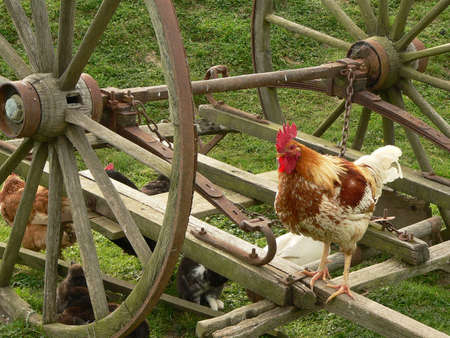 Farmyard animals on wagon wheels photo