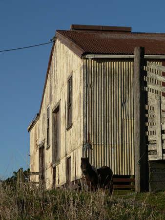 Small horse beside barn Standard-Bild