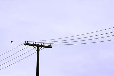 Vogel zu landen auf einer Hochspannungsleitung