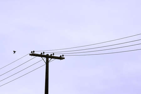 Bird about to land on a power line