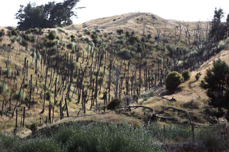 Cropped trees in rural scene Standard-Bild