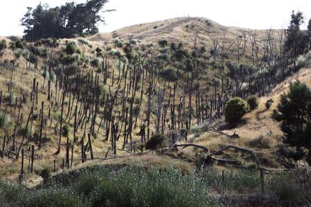 Cropped trees in rural scene Stock Photo - 7509714