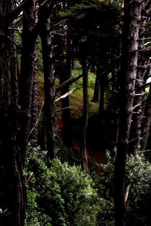 Tall trees in deep forest Standard-Bild