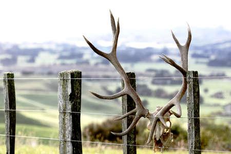 Deer head with antlers on fence Standard-Bild