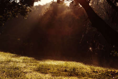 Light reflecting through mist Stock Photo - 7488853